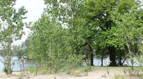 Badestelle in Schmoeckwitz