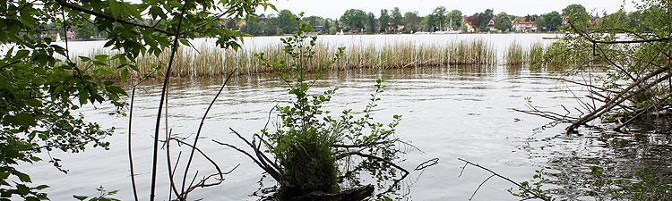 Schilf am Ufer des Zeuthener Sees, Schmöckwitzer Werder
